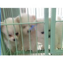 Пэт заборная сварная для собак и кошек (TS-E66)