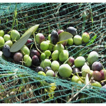 PEHD agriculture olive emballage net