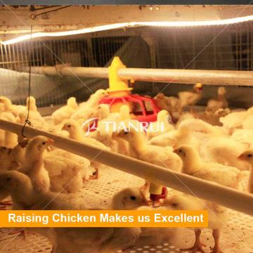 Sistema de alojamento de aves de capoeira de design Tianrui para frangos de corte