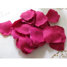Pétalo de rosa secado fucsia