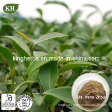 Pure Natural Oolong Tea Extract Pholyphenols 20%, 60%, 80%