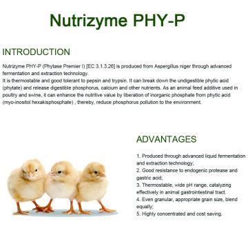 Fitasa termoestable y resistente a proteasas para piensos