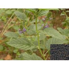 High Purity Malaytea Scurfpea Fruit Extract