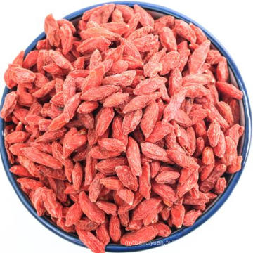 Le plus grand goji chinois sauvage Goji Berries Organic Green Food certifié