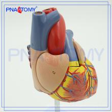 PNT-0400 Modelo de coração modelo de treinamento de coração de escola médica de ciência