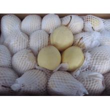 China 72/80/96/112/18kg /Carton Ya Pear