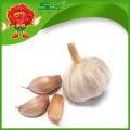 Factory price dry garlic
