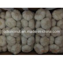 Чистый белый чеснок Выберите качество 1 кг / мешок