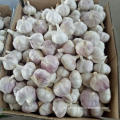GARLIC TOP QUALITY GROSSHANDEL GARLIC