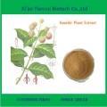 100% natural de extrato de plantas de Gambir em pó
