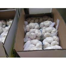 Carton Packing Pure White Garlic (5.5cm and up)
