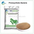 Used probiotic photosynthetic bacteria organic animal feed