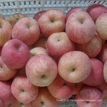 100-113-125 De Boa Qualidade FUJI Apple