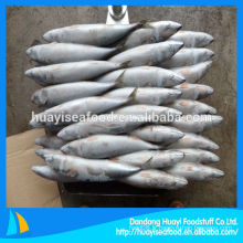 Frozen Mackerel 300-500g