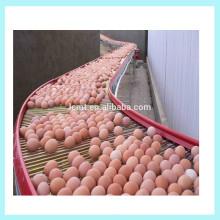 machine de collecte d'oeufs populaire pour cage de caille