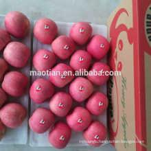 Best price fuji apple stripe big sizes