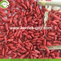 Factory Supply Fruits Nutrition sexuelle Stärke Goji Berry