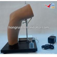 Modèle de formation à l'injection intra-articulaire de coude de luxe ISO, entraînement par injection conjointe