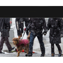 Laisse en cuir pour chien avec amortisseur noir pour Comsun