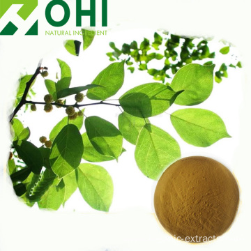 Mulberry Leaf Extract 1-Deoxynojimycin