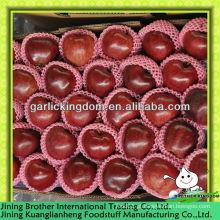 China 2013 nova colheita maçã huaniu