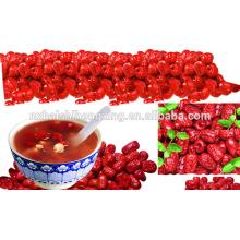 Jujube chinês datas vermelhas jujuba seco