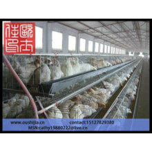 Chicken Cage for poultry farm( factory price )
