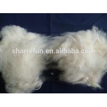 100% pure fibre de cachemire mongole fine Ivoire