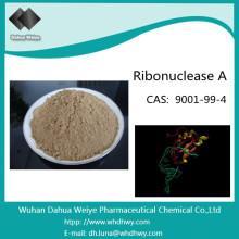 CAS: 9001-99-4 Ribonuklease a aus Rinderpankreas