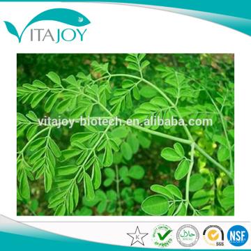 Чистый органический порошок листьев Moringa с лучшей ценой