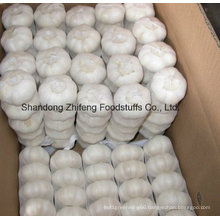 2016 New Crop Fresh Chinese Garlic