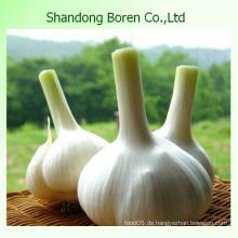 Chinesischer frischer weißer Knoblauch im heißen Verkauf