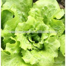 MLT08 Dake heat resistant green chinese lettuce seeds in vegetable seeds