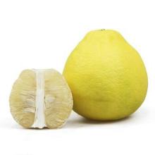 Hot Selling Big Citrus Fruit Fresh Honey Shatian Pomelo