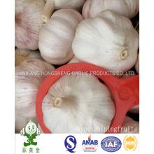 Melhor qualidade Alho branco normal 6.0cm