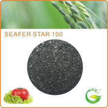 Fertilizante Foliar Fertilizante de Extrato de Algas Marinhas