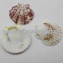 36-45MM forato Sea Shell perline Striped Venus Clam
