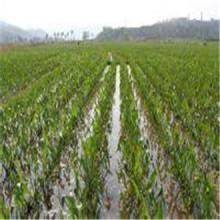 Tissu non tissé à 100% PP avec UV pour l'agriculture en tant que mat de lutte contre les mauvaises herbes, tissu anti-herbe, couverture végétale