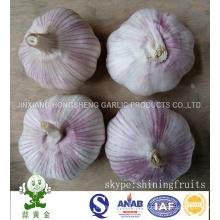Frische normale weiße Knoblauchgröße 5.0cm Von China-Festland