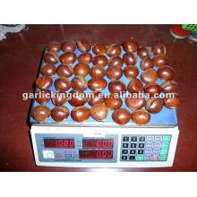 40-50pcs / kg castanha fresca
