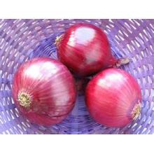 Oignon rouge de haute qualité de la récolte 2016