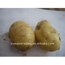 Pomme de terre fraîche chinoise bon marché
