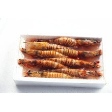 Hot Sale Sea Congelé Crevettes