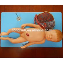 ISO Advanced Anatomical Model of Fetus с Viscus и Placenta, модель ребенка
