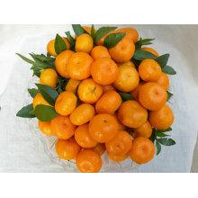 Qualidade superior para a laranja do umbigo amarelo