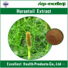 100% natürliches Schachtelhalm-Extrakt-Pulver