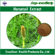 100% Natural Horsetail Extract Powder