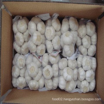 2016 Fresh Pure White Garlic in Lowest Price From China