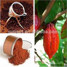Théobroma Cacao L