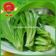 2015 Chinese fresh Youmai lettuce packing